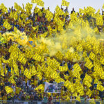 The Fans of Valentino Rossi color yellow 46 grandstands of the MotoGP circuits around the world